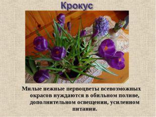 Милые нежные первоцветы всевозможных окрасов нуждаются в обильном поливе, доп