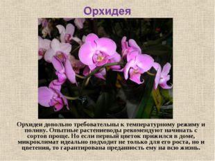 Орхидеидовольно требовательны к температурному режиму и поливу. Опытные раст