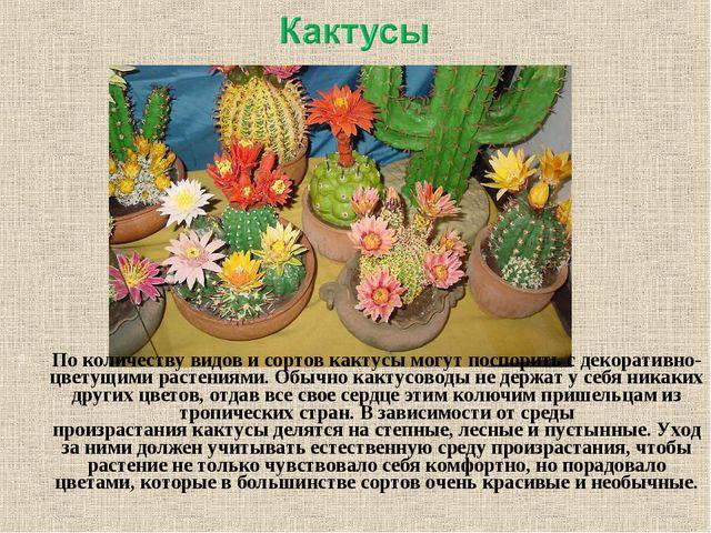 По количеству видов и сортов кактусы могут поспорить с декоративно-цветущими...