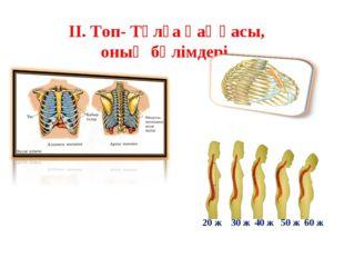 ІІ. Топ- Тұлға қаңқасы, оның бөлімдері. 20 ж 30 ж 40 ж 50 ж 60 ж
