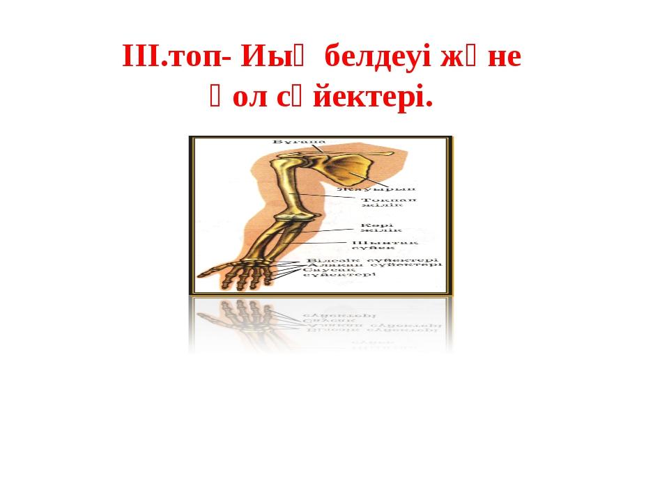 ІІІ.топ- Иық белдеуі және қол сүйектері.