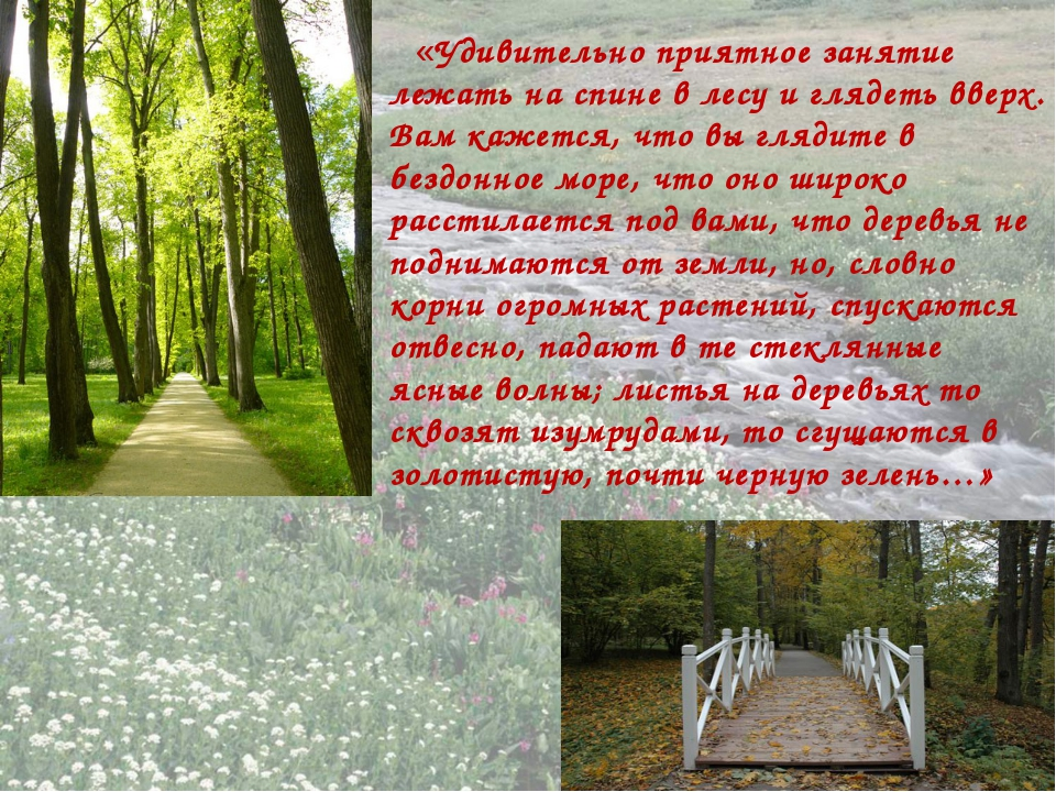«Удивительно приятное занятие лежать на спине в лесу и глядеть вверх. Вам ка...