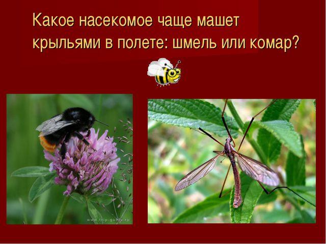 Какое насекомое чаще машет крыльями в полете: шмель или комар?