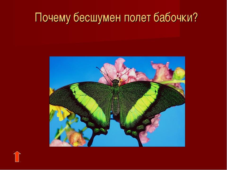 Почему бесшумен полет бабочки?