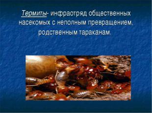 Термиты- инфраотряд общественных насекомых с неполным превращением, родствен