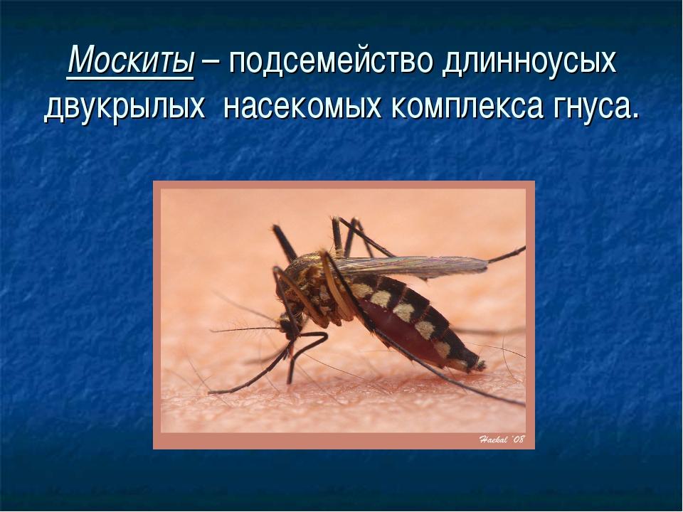 Москиты – подсемейство длинноусых двукрылых насекомых комплекса гнуса.