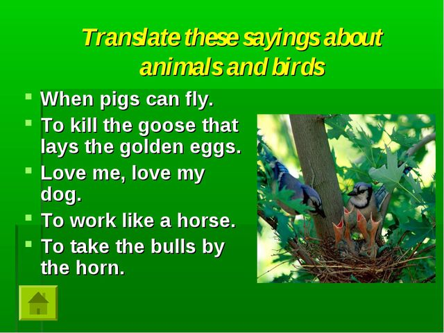 Translate these sayings about animals and birds When pigs can fly. To kill th...
