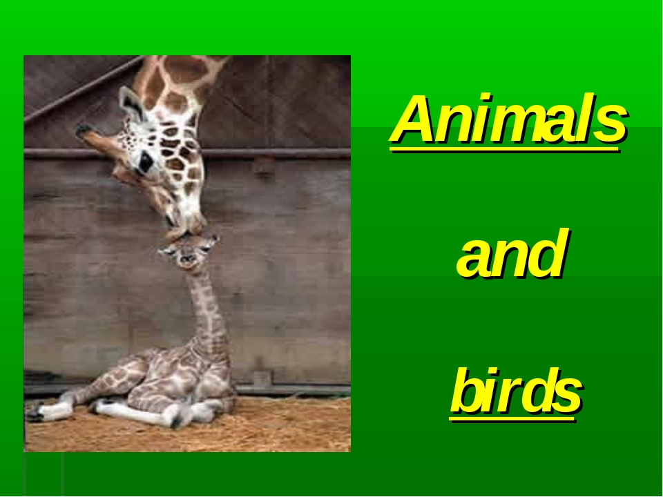 birds Animals and
