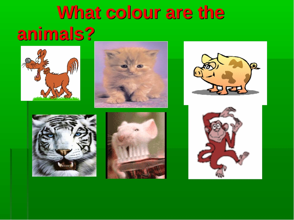 What colour are the animals?