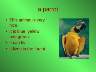 a parrot This animal is very nice. It is blue, yellow and green. It can fly.