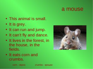 a mouse This animal is small. It is grey. It can run and jump. It can't fly a