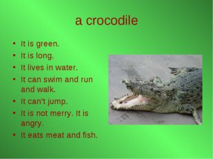 a crocodile It is green. It is long. It lives in water. It can swim and run a