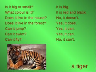 a tiger Is it big or small? What colour is it? Does it live in the house? Doe