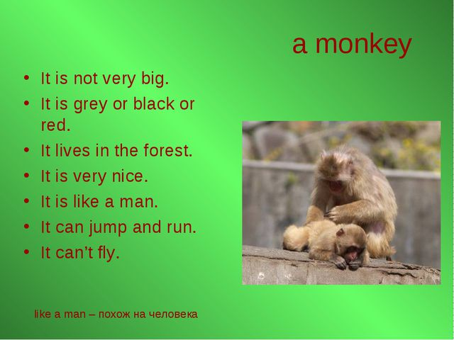 a monkey It is not very big. It is grey or black or red. It lives in the fore...