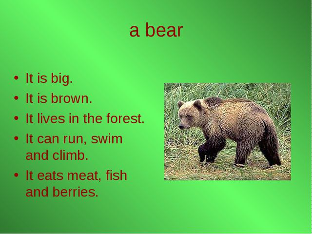 a bear It is big. It is brown. It lives in the forest. It can run, swim and c...