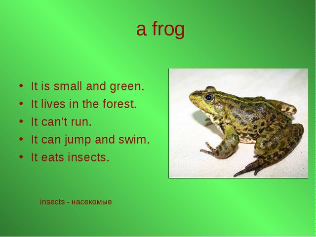 a frog It is small and green. It lives in the forest. It can't run. It can ju...