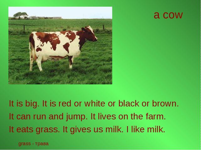 a cow It is big. It is red or white or black or brown. It can run and jump. I...