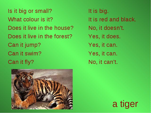a tiger Is it big or small? What colour is it? Does it live in the house? Doe...