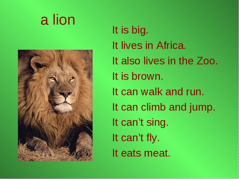 a lion It is big. It lives in Africa. It also lives in the Zoo. It is brown....