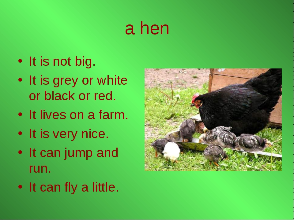 a hen It is not big. It is grey or white or black or red. It lives on a farm....