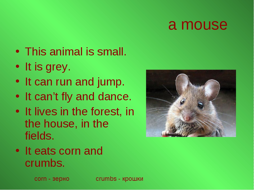 a mouse This animal is small. It is grey. It can run and jump. It can't fly a...