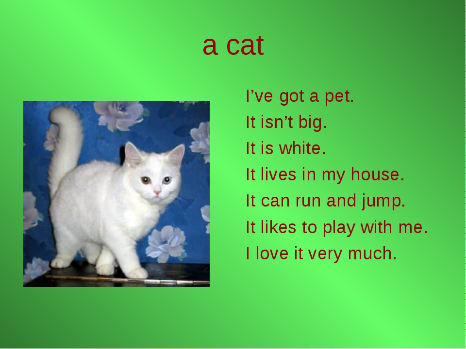 a cat I've got a pet. It isn't big. It is white. It lives in my house. It can...