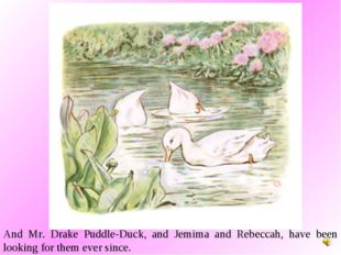 And Mr. Drake Puddle-Duck, and Jemima and Rebeccah, have been looking for the