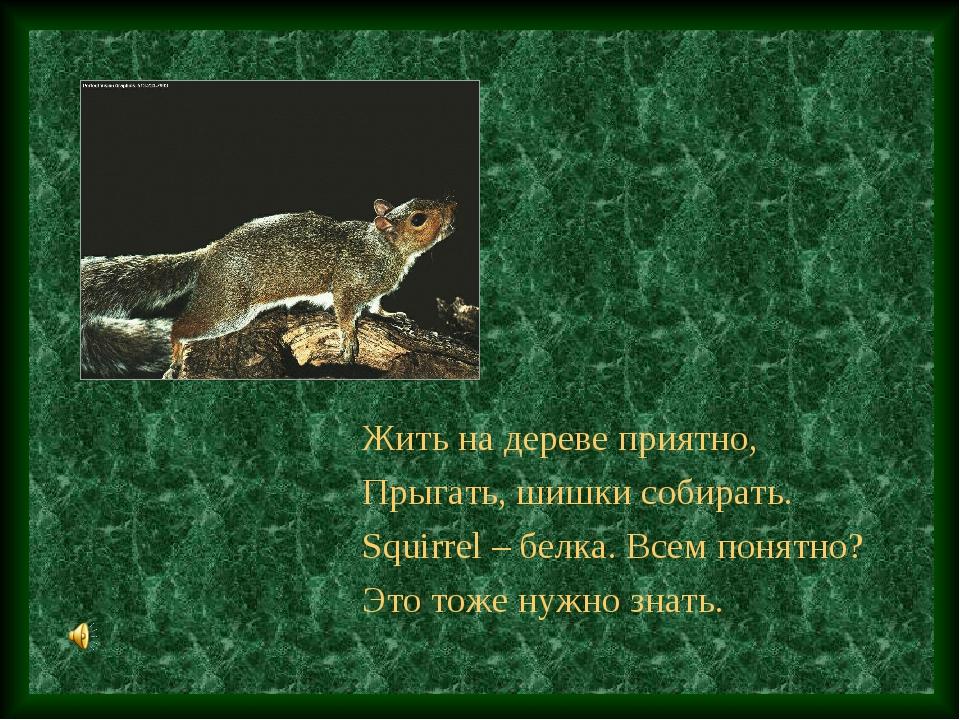 Жить на дереве приятно, Прыгать, шишки собирать. Squirrel – белка. Всем понят...
