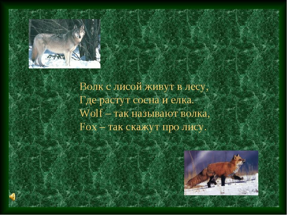 Волк с лисой живут в лесу, Где растут сосна и елка. Wolf – так называют волка...