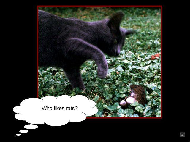 Who likes rats?