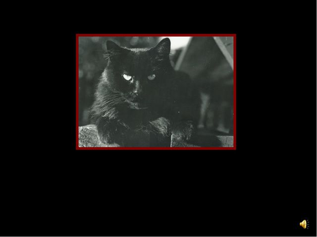My cat is black
