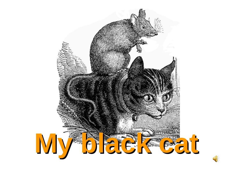 My black cat