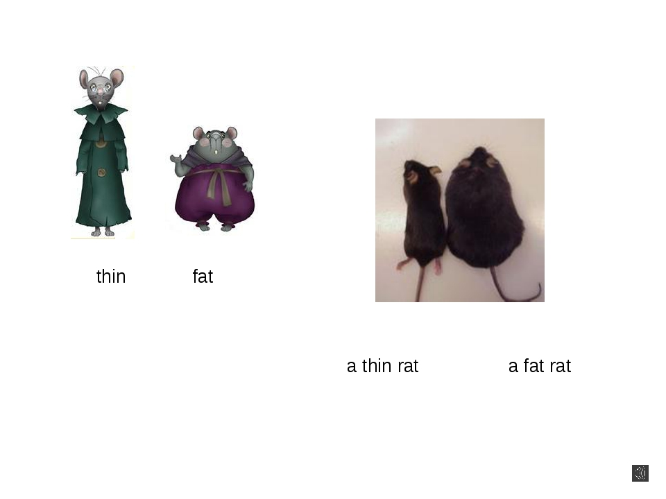 thin fat a thin rat a fat rat
