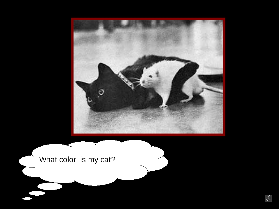 What color is my cat?