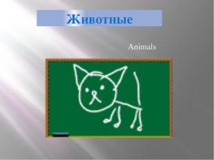 Животные Animals
