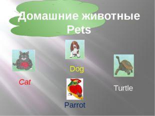 Домашние животные Pets Turtle Cat Dog Parrot
