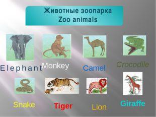 Crocodile Elephant Camel Lion Tiger Monkey Snake Животные зоопарка Zoo anima