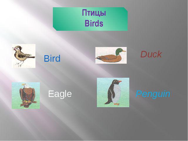 Птицы Birds Bird Duck Eagle Penguin