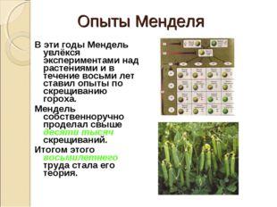Опыты Менделя В эти годы Мендель увлёкся экспериментами над растениями и в те
