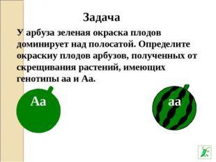 У арбуза зеленая окраска плодов доминирует над полосатой. Определите окраскиу
