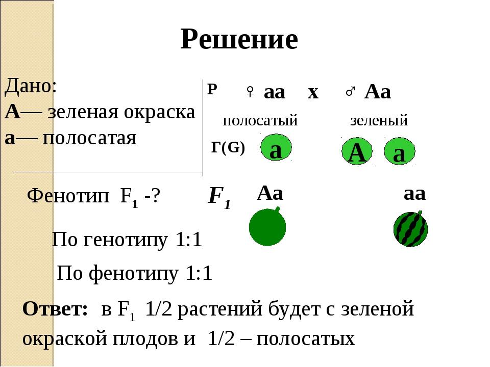 Дано: А— зеленая окраска а— полосатая Фенотип F1 -? Р ♀ аа ♂ Аа х полосатый з...