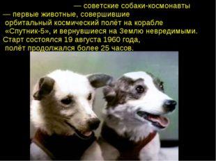 Бе́лка и Стре́лка— советские собаки-космонавты — первые животные, совершивш