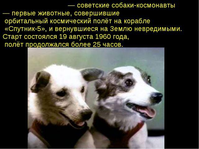 Бе́лка и Стре́лка— советские собаки-космонавты — первые животные, совершивш...