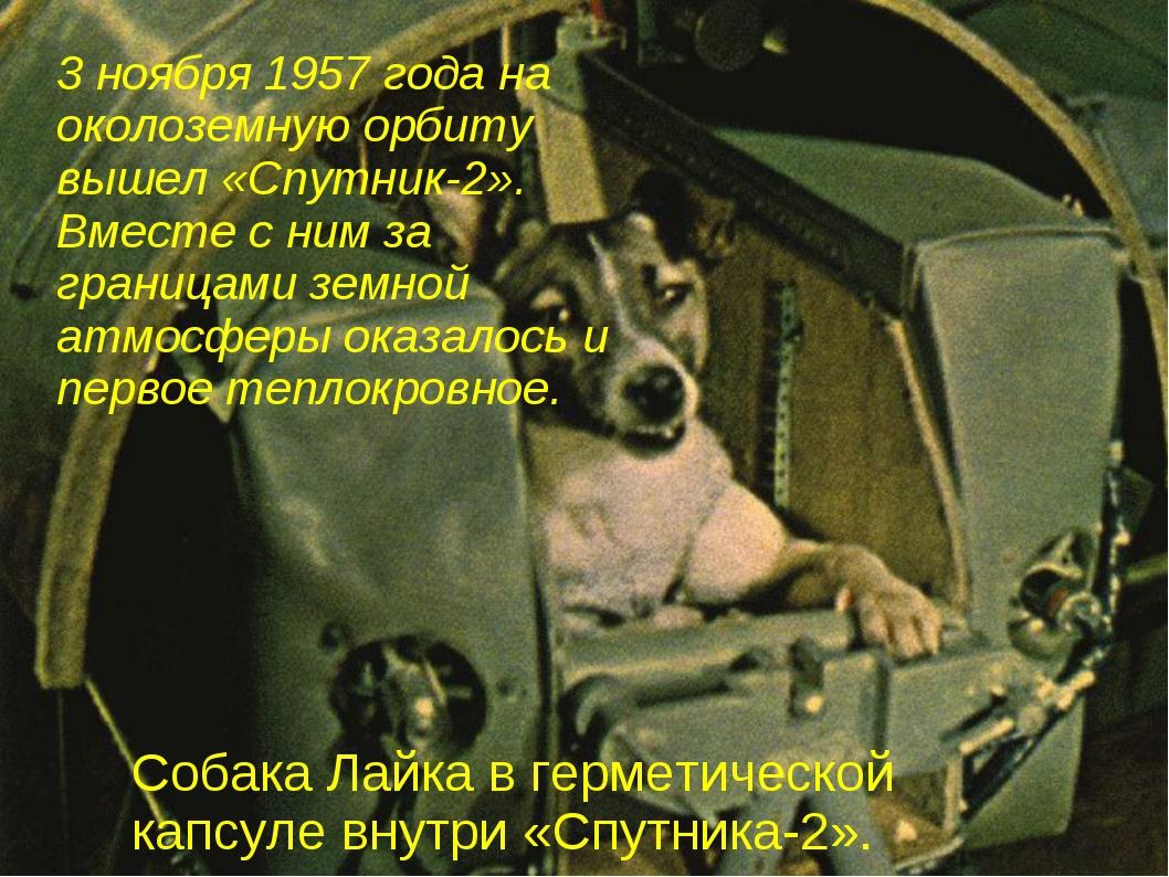3 ноября 1957 года на околоземную орбиту вышел «Спутник-2». Вместе с ним за г...