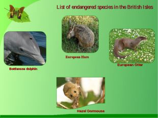 List of endangered species in the British Isles Bottlenose dolphin European