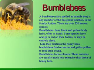 Bumblebees A bumblebee (also spelled as bumble bee) is any member of the bee