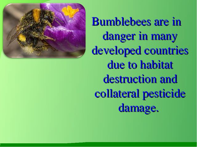 Bumblebees are in danger in many developed countries due to habitat destruct...