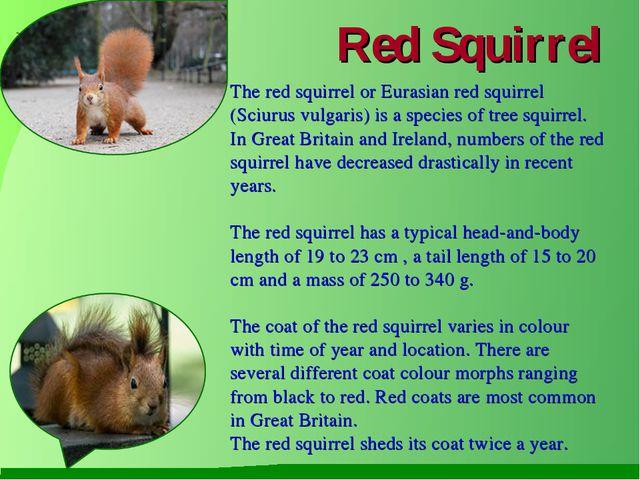 Red Squirrel The red squirrel or Eurasian red squirrel (Sciurus vulgaris) is...