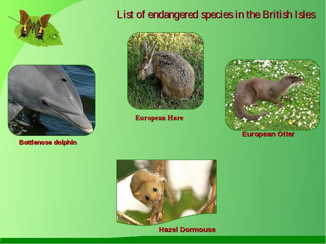 List of endangered species in the British Isles Bottlenose dolphin European...