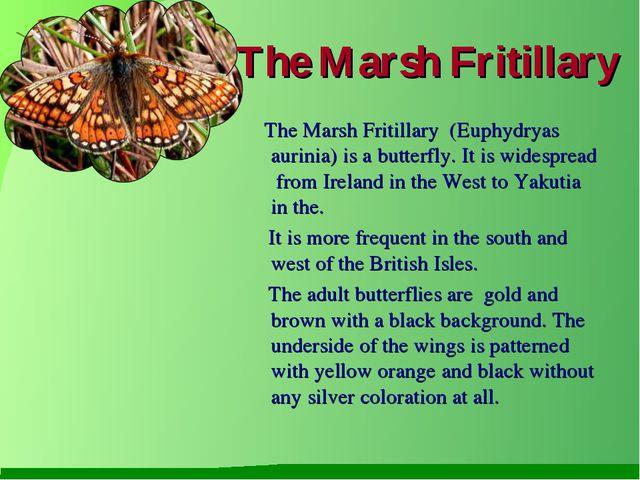 The Marsh Fritillary The Marsh Fritillary (Euphydryas aurinia) is a butterfly...